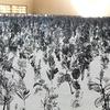 【旧家和楽青少年の家、旧上岡小学校編】3泊4日で茨城県北芸術祭2016に行ってきた!!滞在時間や移動時間など