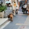 タイ犬も散歩してるわ。