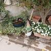 冬の間、花壇を放置してたら糞害が…野良猫さんもう少し遠慮してちょ