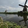 オランダ・キンデルダイクの鯉釣り
