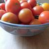 連休明けの畑からトマトがたくさん