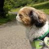 【今日のくーちゃん】久々に良いお天気!四季の森公園でお散歩してきました♪