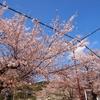 2018年も京都で桜を楽しもう!こんなにある無料で楽しめる花見スポット