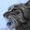 2月後半の #ねこ #cat #猫 その4