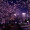 桜の季節も終わり…