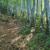 朝日差すブナ林の道を登る