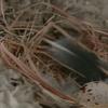 巣作りから14日目(2軒目)。巣作り完成!やったー!!産卵しましたー!!…卵は一つ。ツバメは、どのぐらい卵を産むのかな?