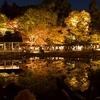 【紅葉&シャバーニ】年間来場者数ランキング2位!愛知県東山動物園