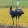 2019年12月30日の鳥撮り-鹿児島県