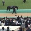 東京競馬9R アイビーステークス パドック直前予想 ◎7 ソウルスターリング