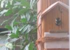 入らないシジュウカラ用巣箱|設置場所を変えたら1年半で営巣されました!