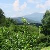 開田高原 ブルーベリー狩り2016