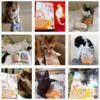 皆さんの猫さん写真と本の画像をInstagramに投稿しています!! 2020年12月15日までの掲載分