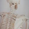 自律神経を整える骨格調整