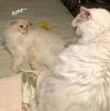 美味💕バンミーサンドイッチ:猫さんドタバタ