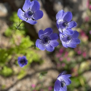 神経疲れに花を見よう