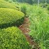 風通しを良くするための草刈り作業