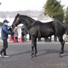 2022年新種牡馬:シャンハイボビー