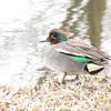 ほどよい距離感~合併記念見沼公園の水鳥たち~