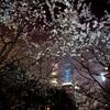 カメラを持って上海の夜桜撮影スポットへ OM-D E-M1Mr2