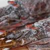 毎日一枚。「伊勢海老プロジェクト」美味しさ度:☆☆☆☆☆ ~写真で届ける伊勢志摩観光~