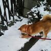 初めての雪に大はしゃぎ