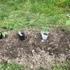 畑  2019年夏野菜 新しい苗を植えました。今年は生姜に挑戦。