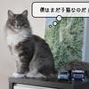 猫雑記 ~むく6ヶ月の体重測定~