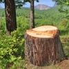 林業への就職は、日本の文化を守ることに通じる!歴史や文化財が好きなら進む道の一つ。
