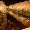初めて夜桜を撮影しに行った話