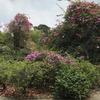 シンガポールで唯一の世界遺産!シンガポール植物園の見どころ | 2017年8月シンガポール旅行3