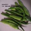 火曜日 台風前に庭から豆