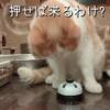 雨田甘夏、ムカムカです。【猫と唾液と共有事情】