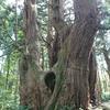戸沢村 幻想の森をご紹介!🏞️