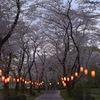 上大島キャンプ場の桜並木