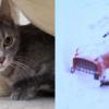 キャリアに閉じ込められたまま、大雪吹き溜まりに埋もれていた猫