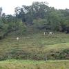 牛の放牧延長