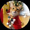 クリスマス2017:猫のクウ、フードなしマントを着る