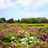 #0232 千葉県にある「昭和の森」公園がよかった。