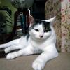 猫ブログ第十六弾 最近のミーさん、ずいぶんとくつろいでいます……