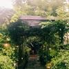 雨の日のグリーンハウス