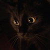 こわい!さみしい!猫が夜泣きをするのはまっくらな電気が原因かも