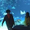 水族館デート、そして・・・