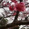 沖縄の旅 3日目