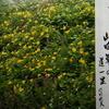 4月16日 誕生日の花と花言葉