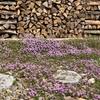 タイムとミツバチと、それから春の日々