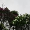 えぃじーちゃんのぶらり旅ブログ~コロナで足止め2020年5月下旬 北海道石狩市編 その3