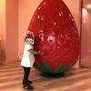 「東京ストロベリーパーク」貴重な都内のイチゴ狩りスポット
