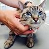 自宅でできるネコの皮下輸液のやり方
