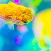 ボホール島周辺のカビラオ島、バングラオ島、バリカサグ島のダイビング【フィリピン留学】
